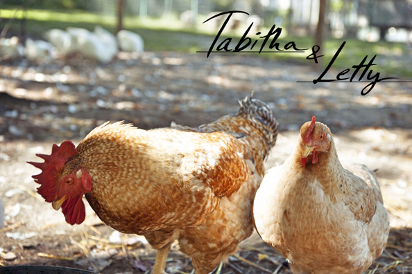 Tabitha, the rooster, and Letty, the hen, at Tamerlaine Farm Animal Sanctuary. (Gabrielle Stubbert)