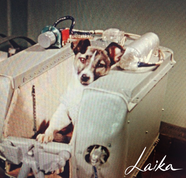 Laika the Soviet Space dog 1957