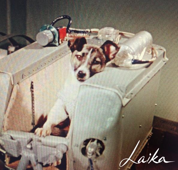 Laika the Soviet Space dog 1957