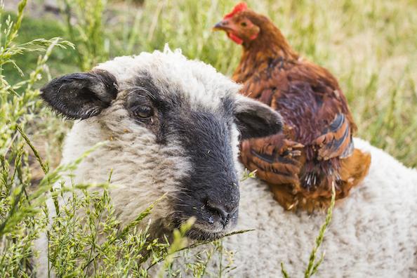 Santuario Igualdad Interespecie vegan