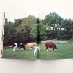 The Survivors2