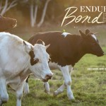 Enduring Bond