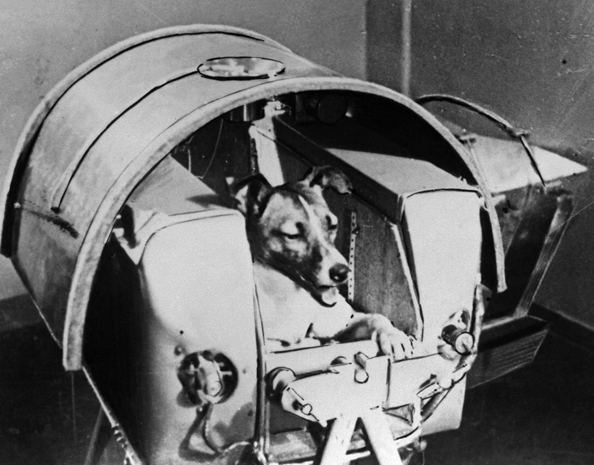 Laika Space dog