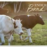 LAIKA Enduring Bond