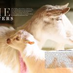 LAIKA Issue Seven-She Matters